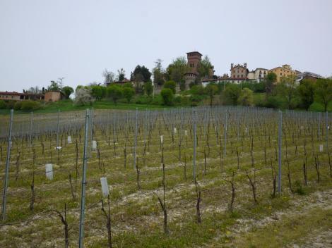 Monferrato