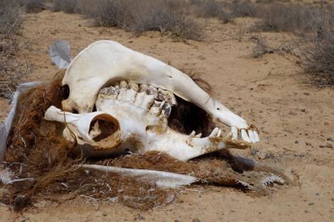 Karakum Desert.